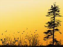 Papier peint d'oiseaux Photographie stock
