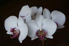 Papier peint d'orchidée images libres de droits