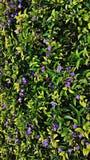 Papier peint de HD avec les fleurs et très les feuilles lilas de vert photo stock
