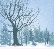 Papier peint de paysage de neige de Noël Fond de forêt de Milou Tre Images stock