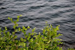 Papier peint de photographie de nature Image stock