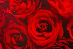 Papier peint de roses rouges Photos libres de droits