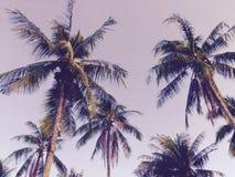 Papier peint et fond d'idée d'art d'arbre de noix de coco Image stock