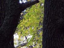 Papier peint fabriqué à partir de des arbres Photo stock