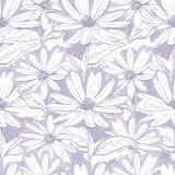 Papier peint floral gris lilas monochrome, camomilles sans couture de modèle, marguerites tirées par la main Image libre de droits