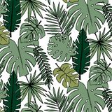 Papier peint gai de modèle de plage des feuilles vert-foncé tropicales des palmiers et de l'oiseau de fleurs du plumeria de strel illustration libre de droits