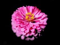 Papier peint rose Images stock