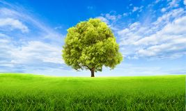 Papier peint scénique de vue de paysage vert d'été Arbre solitaire sur la colline herbeuse et le ciel bleu avec des nuages Printe images stock