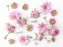 Papier peint, texture Fleurs roses sur le fond blanc Configuration plate, vue supérieure Photographie stock libre de droits