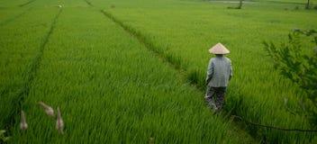 Papier peint vietnamien Photographie stock libre de droits