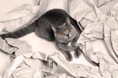 Papier plié photos libres de droits
