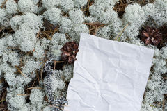 Papier vide et chiffonné vide sous les pieds dans les bois Image stock