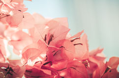 Papierblumen oder Bouganvillaweinlese Lizenzfreie Stockfotografie
