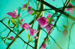 Papierblumen-Weinlesefoto Stockfotografie