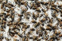 Papierfalle der klebrigen Fliege Stockfotos