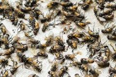 Papierfalle der klebrigen Fliege Lizenzfreie Stockfotografie