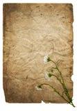 Papierhintergrund mit weißen Blumen lizenzfreie stockfotos