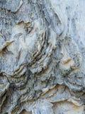 Papierowa drzewna barkentyna z designs-5022246 Obrazy Stock