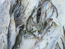 Papierowa drzewna barkentyna z designs-5022241 Fotografia Royalty Free