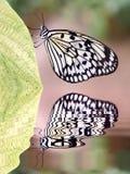 Papierowa kania motyla above - woda z odbiciem Fotografia Stock