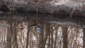 Papierowe łodzie błękitny i brąz pławik na zatoczce w wiosna parku zdjęcie wideo