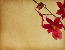 papierowe kwiat tekstury Zdjęcia Royalty Free
