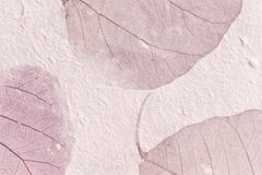 papierowe liść purpury Obraz Royalty Free