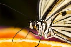 papierowe motyla ryżu Zdjęcie Royalty Free