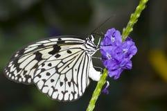 papierowe motyla ryżu Zdjęcie Stock