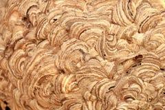 Papierowej osy gniazdeczko Zdjęcie Stock