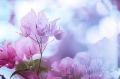 Papierowi kwiaty lub Bougainvillea rocznik Obraz Royalty Free