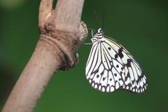 Papierowy kania motyl Obrazy Stock