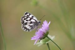Papierowy kania motyl Fotografia Stock
