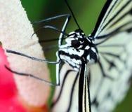 Papierowy kania motyl Zdjęcie Royalty Free