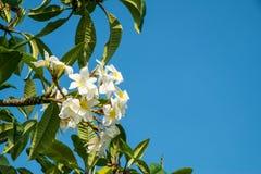 Papierowy kwiat i niebieskie niebo fotografia royalty free
