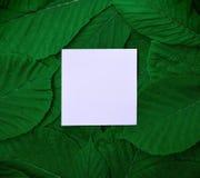 Papierowy prześcieradło po środku zielonych liści kasztan Zdjęcia Stock