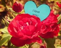 Papierowy serce Kocham Ciebie na czerwieni róży Obraz Royalty Free