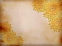 papierowy tło z kwiatem Obraz Stock