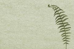 Papierowy tło z zieloną liść paprocią Zdjęcia Stock