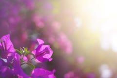 Papierowych kwiatów shurb przed wschodem słońca zdjęcia royalty free