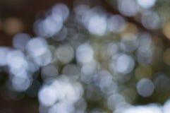 Papiers peints et milieux de texture de nature de bokeh de Blure Images libres de droits