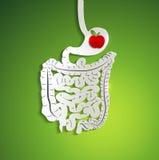 Papierverdauungssystem und Apfel im Magen vektor abbildung