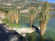 Papiko Grekland sjö Arkivbild