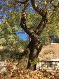 Papiko Grekland sjö Fotografering för Bildbyråer