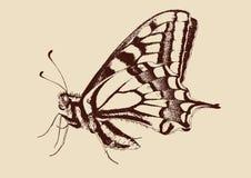 papilio πεταλούδων machaon swallowtail Στοκ φωτογραφία με δικαίωμα ελεύθερης χρήσης