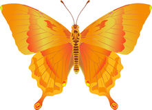 Papilio Feuerphantasie Lizenzfreie Stockfotografie
