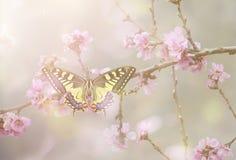 Papilio machaon i blomning royaltyfri bild