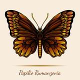 Papilio Rumanzovia Butterfly Royalty Free Stock Photos