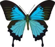 Papilio Ulysse Photographie stock libre de droits