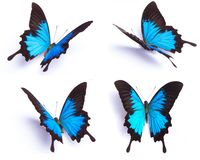 Free Papilio Ulysses Blue Butterfly On The White Background Royalty Free Stock Photography - 160235337
